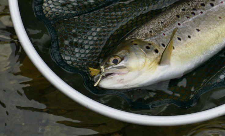 Pêche à la Truite - Tout le matériel de pêche : canne, moulinet, etc.
